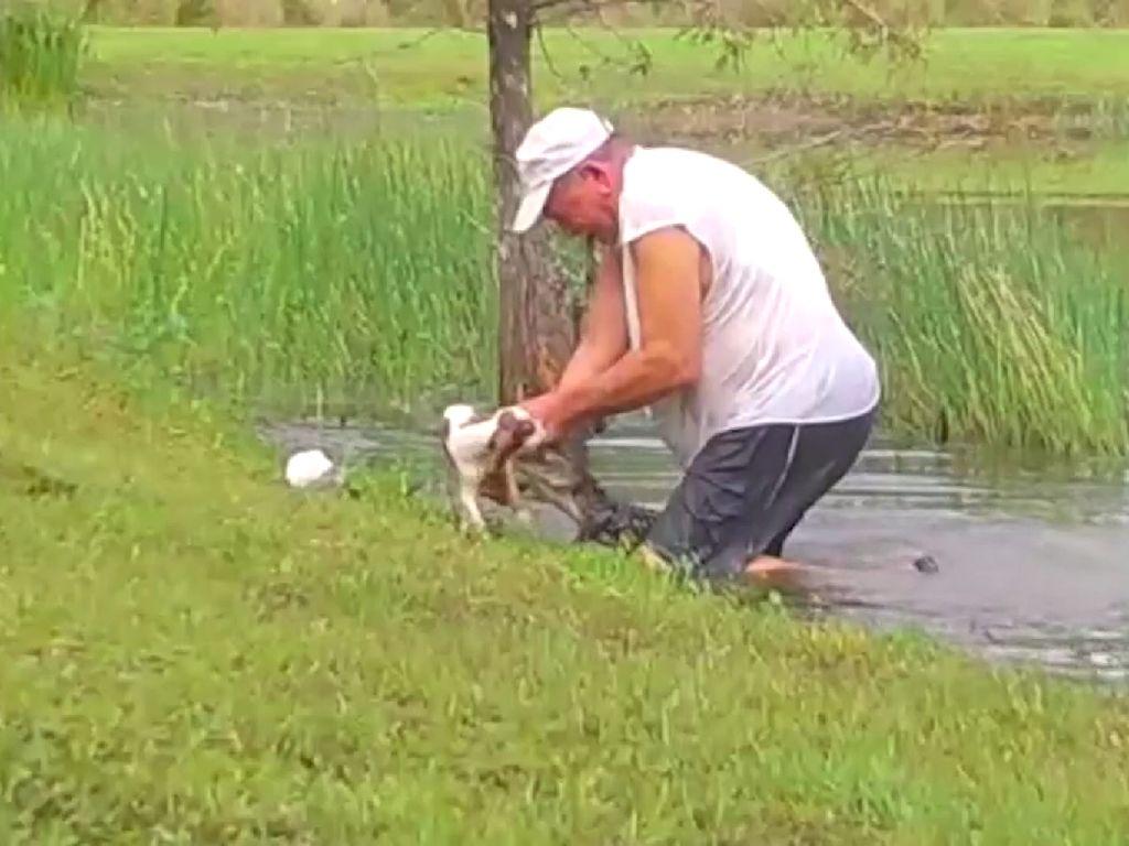 Menegangkan, Pria Ini Selamatkan Anak Anjing dari Mulut Aligator