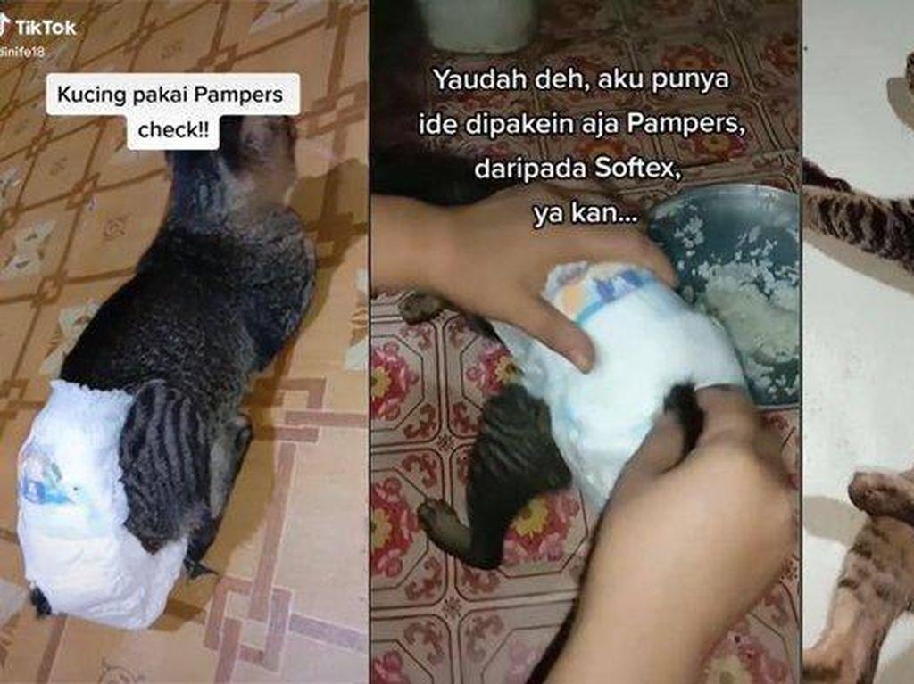Viral Video Kucing Pakai Pampers, Ternyata Begini Alasan di Baliknya