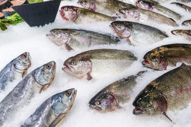 Ikan dapat membantu mengatasi disfungsi ereksi.