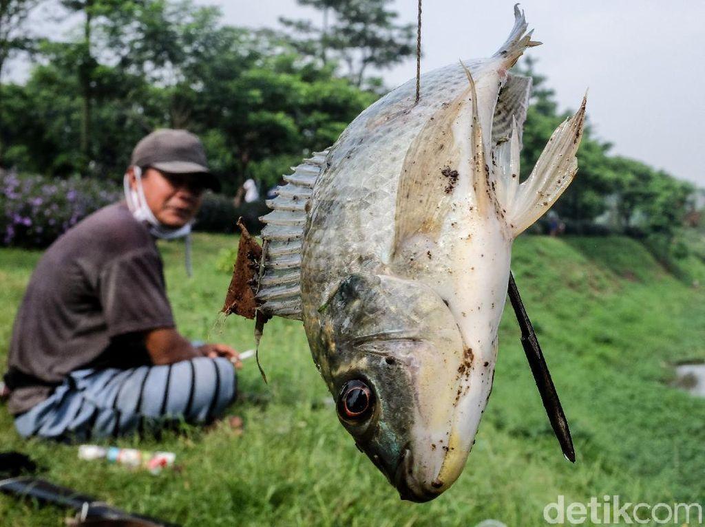 Berburu Ikan dengan Senapan Angin