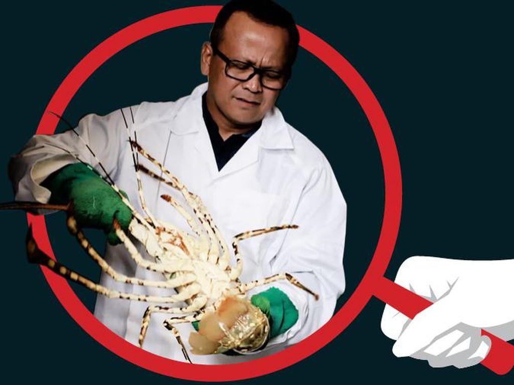 Kontroversi Ekspor Benih Lobsteryang Seret Edhy Prabowo ke KPK