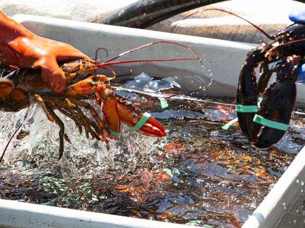 Duh! 5 Negara Ini Ribut Gegara Saling Rebutan Seafood