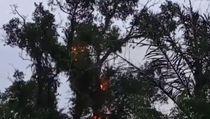 Dugaan Penyebab Pohon Tua di Makam Keramat Pemalang Tetiba Terbakar
