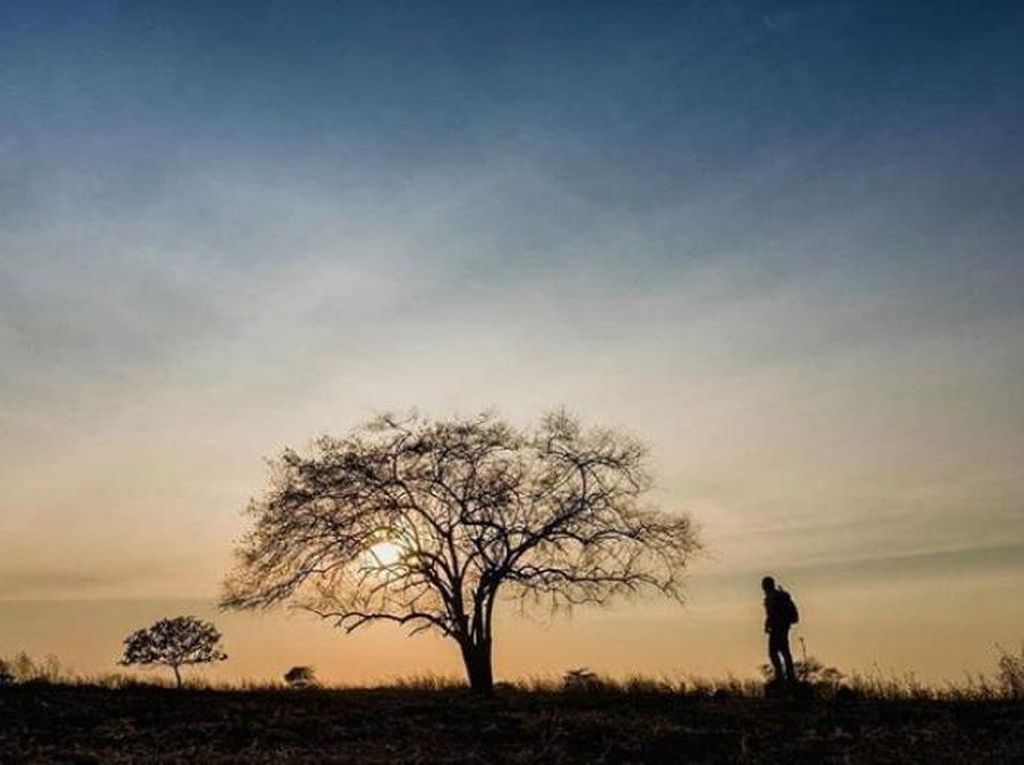 Pembukaan Taman Nasional Baluran Diundur dan Wajib Tes Covid-19
