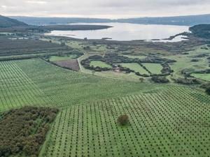 Menengok Sisi Getir Pertanian Hazelnut di Italia