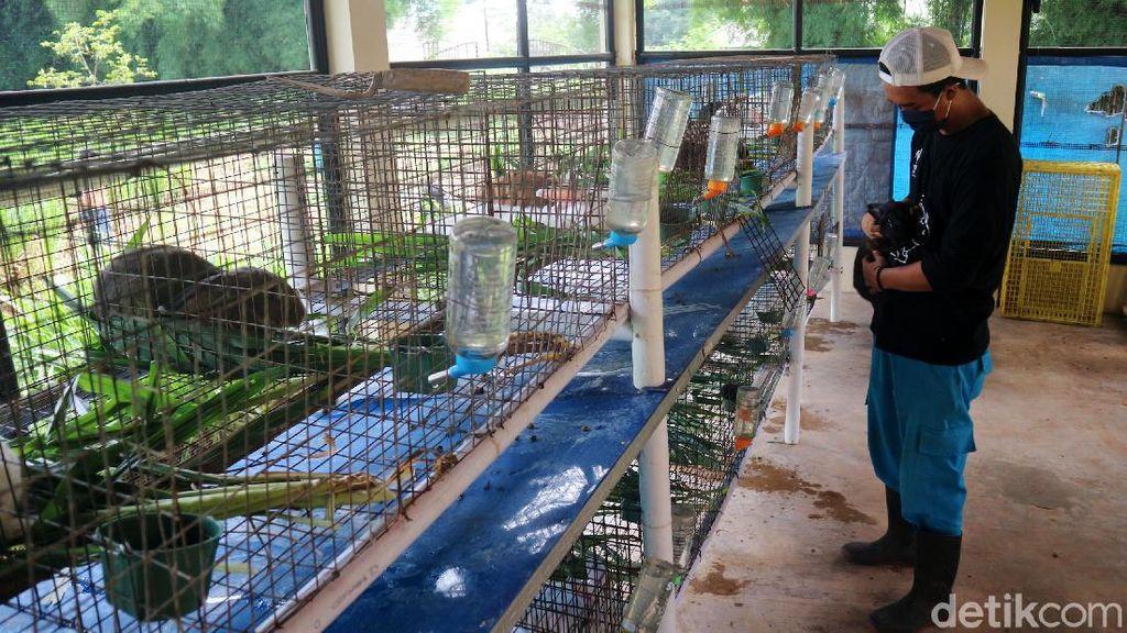Asyik... Kini Ada Taman Kelinci di Jakarta Timur