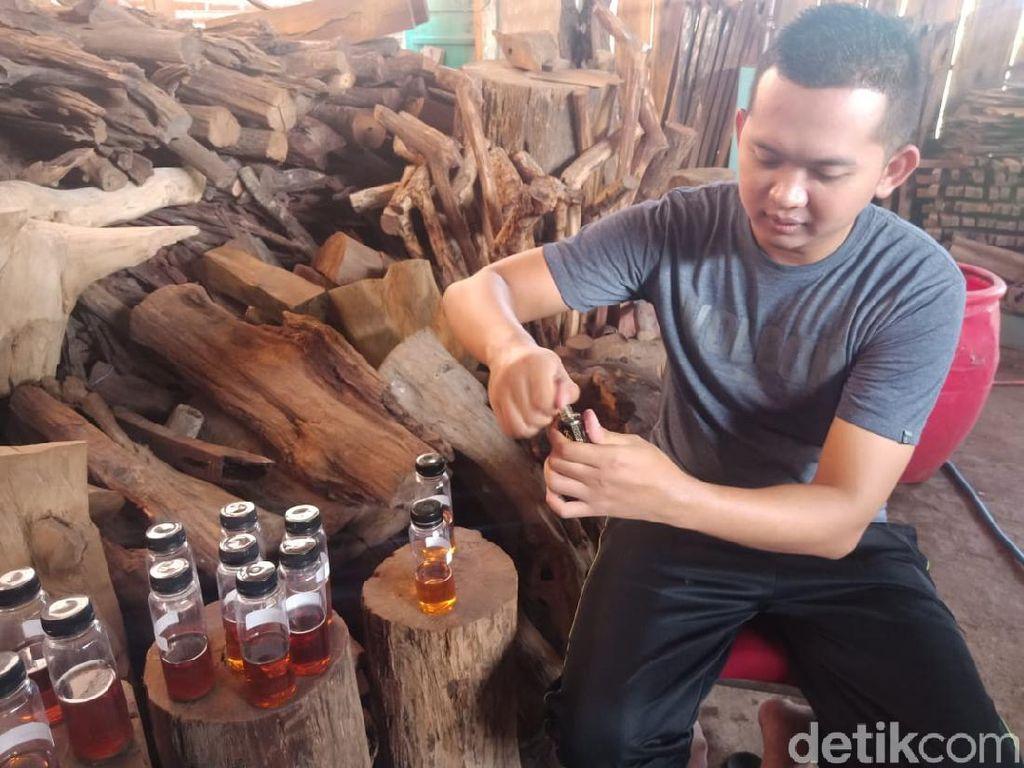 Keren, Minyak Gaharu Made In Jombang Tembus Pasar Ekspor