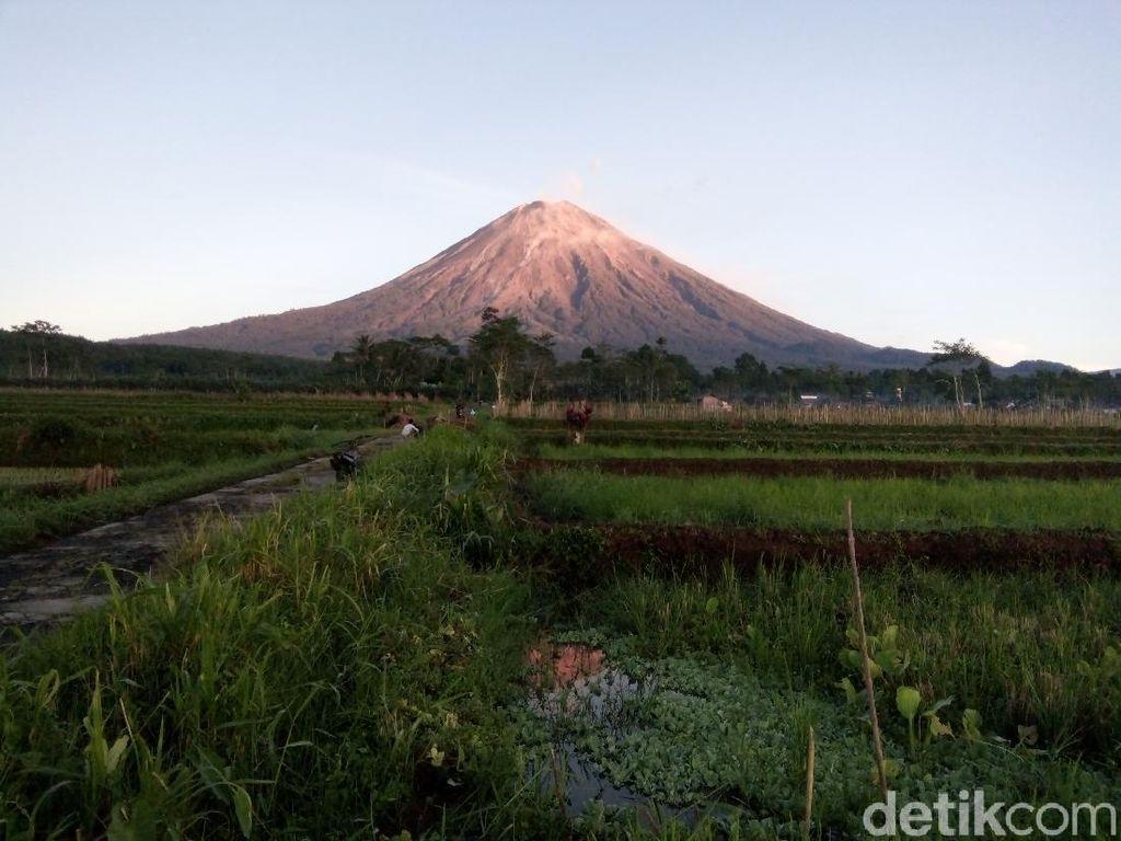 Gunung Semeru 13 Kali Luncurkan Guguran Lava Pijar