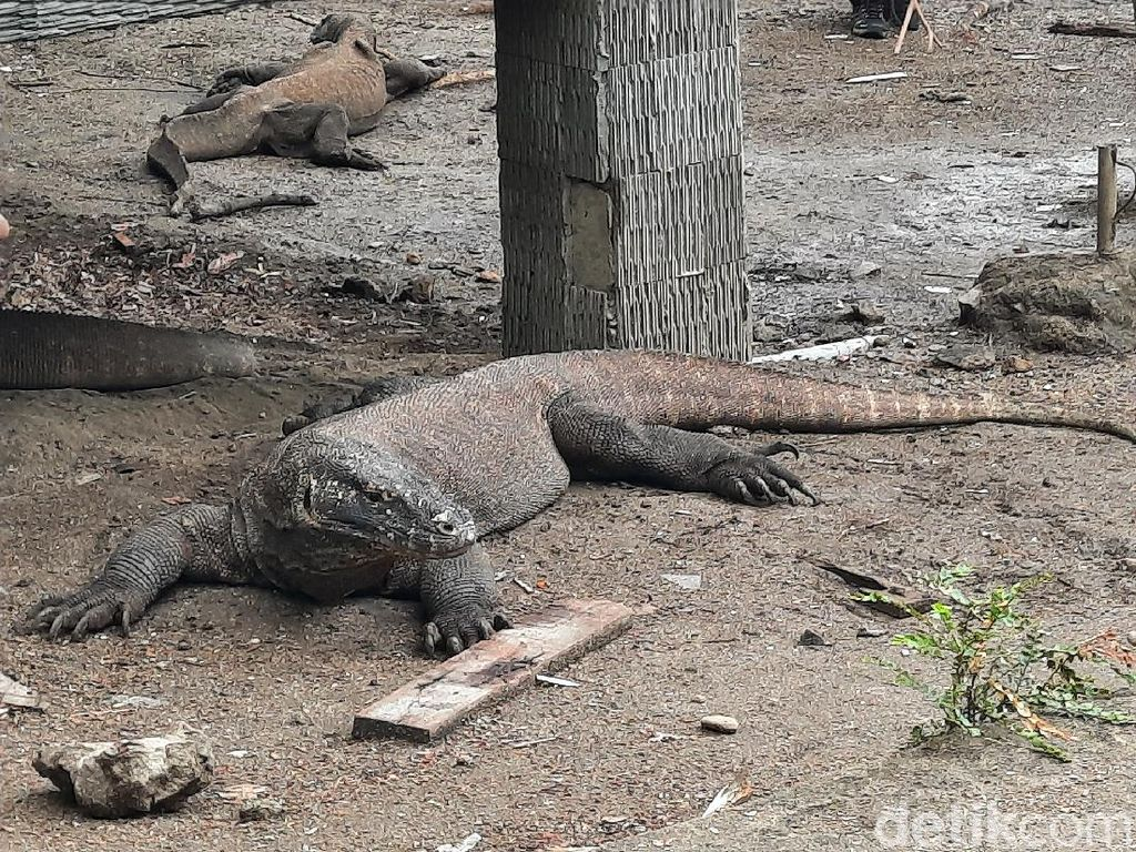 Komisi V DPR Sebut NTT Hanya Punya Komodo hingga Monster dari Uni Soviet