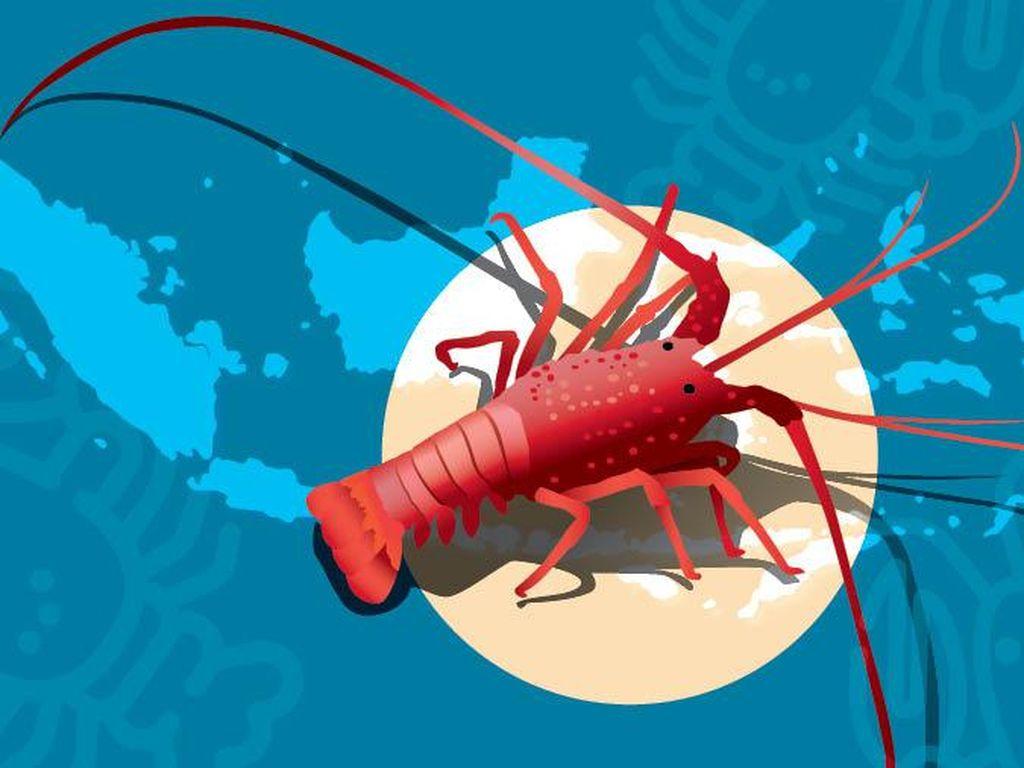 Tiga Daerah Penghasil Lobster Terbaik di RI