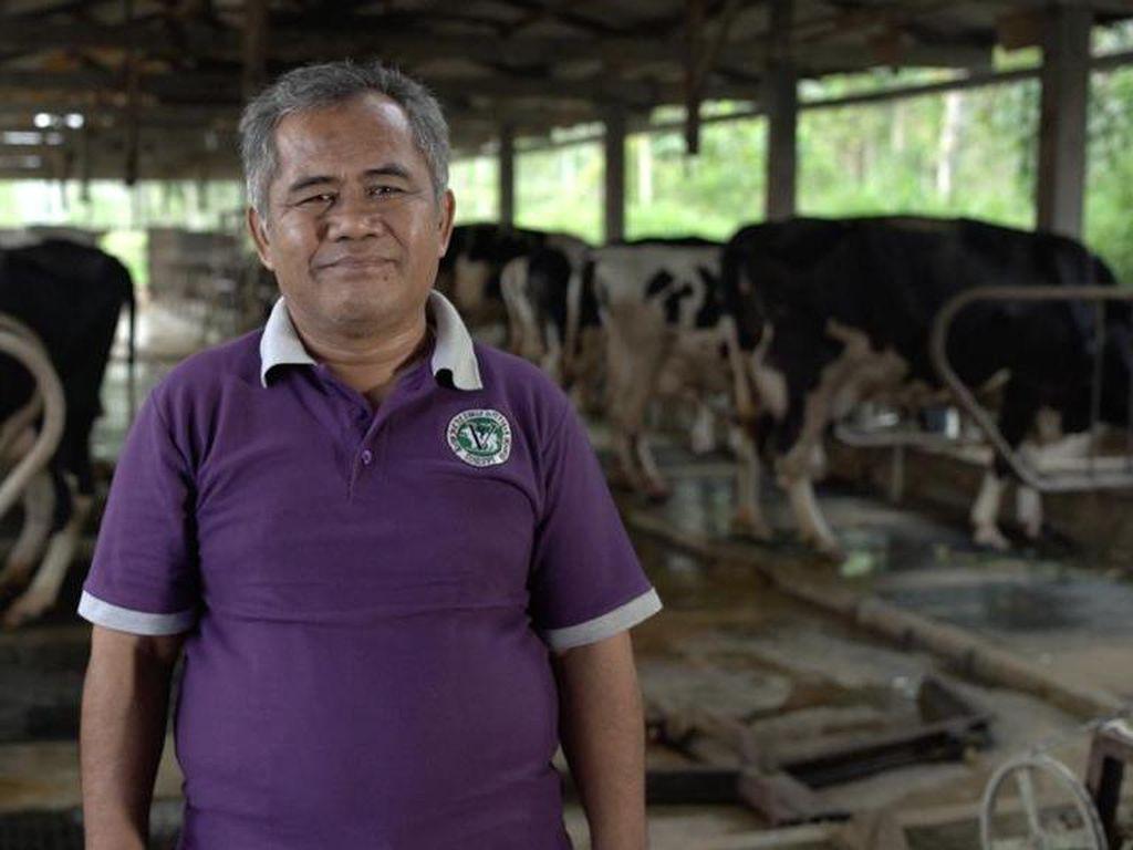 Inisiasi Sentra Susu Sapi di DIY, Dokter Hewan Ini Raih Local Hero Award