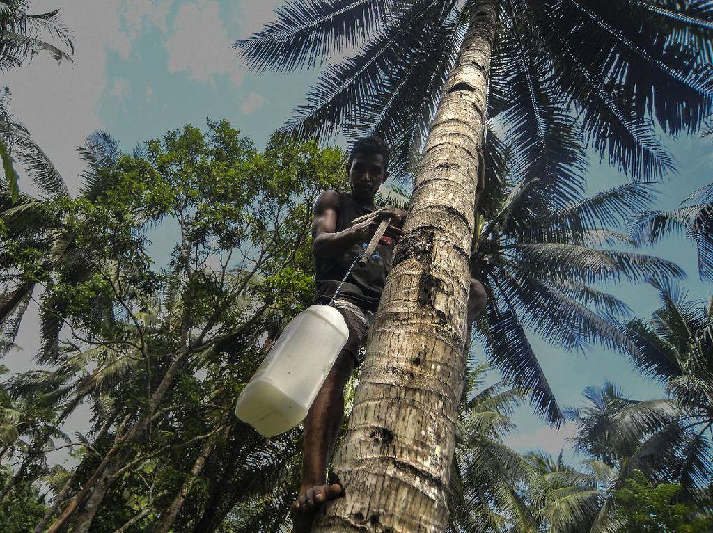 Sopi Minuman Beralkohol Khas Maluku Lekat dengan Acara Adat