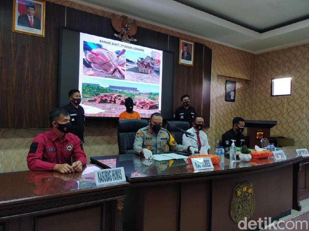 Polisi Tangkap Pelaku Pembalak Liar di Sumedang, 70 Batang Kayu Disita