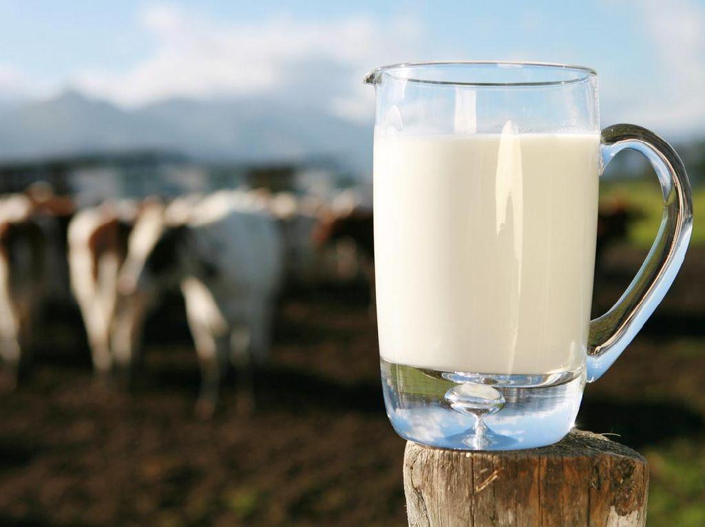 Rasulullah SAW Suka Minum Susu Kambing, Susu Juga Tercatat dalam Al-Quran