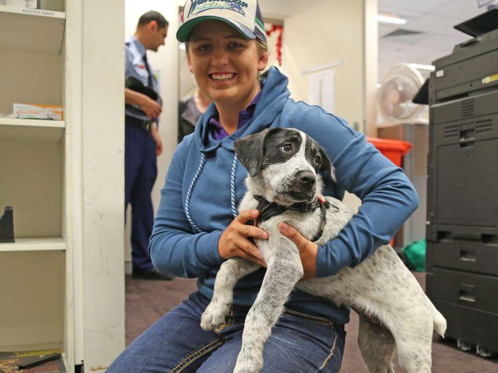 Anak Anjing Reuni dengan Pemilik Setelah Terpisah 480 Kilometer