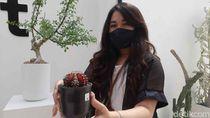 Kaktus dan Sukulen Diminati Saat Pandemi, Estetik Ditanam di Pot Keramik