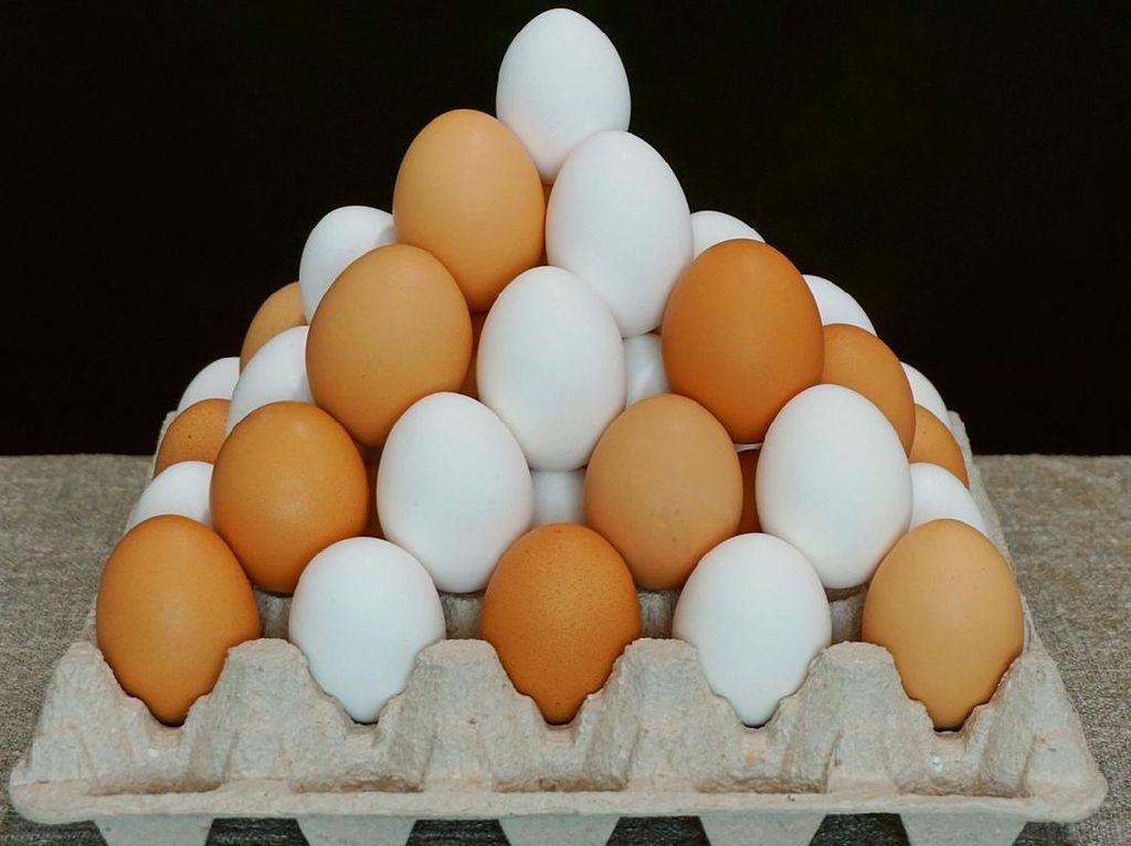 Telur Ayam vs Telur Bebek, Mana yang Lebih Bernutrisi?