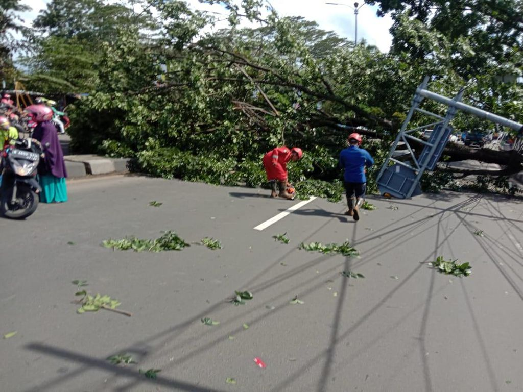 Pohon Tumbang Timpa 2 Pengendara Motor di Cibinong Bogor