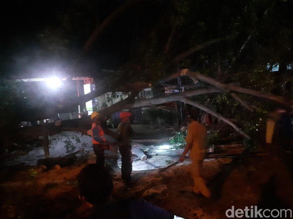 Angin Kencang Tumbangkan Pohon Setinggi 25 Meter di Cicendo Bandung