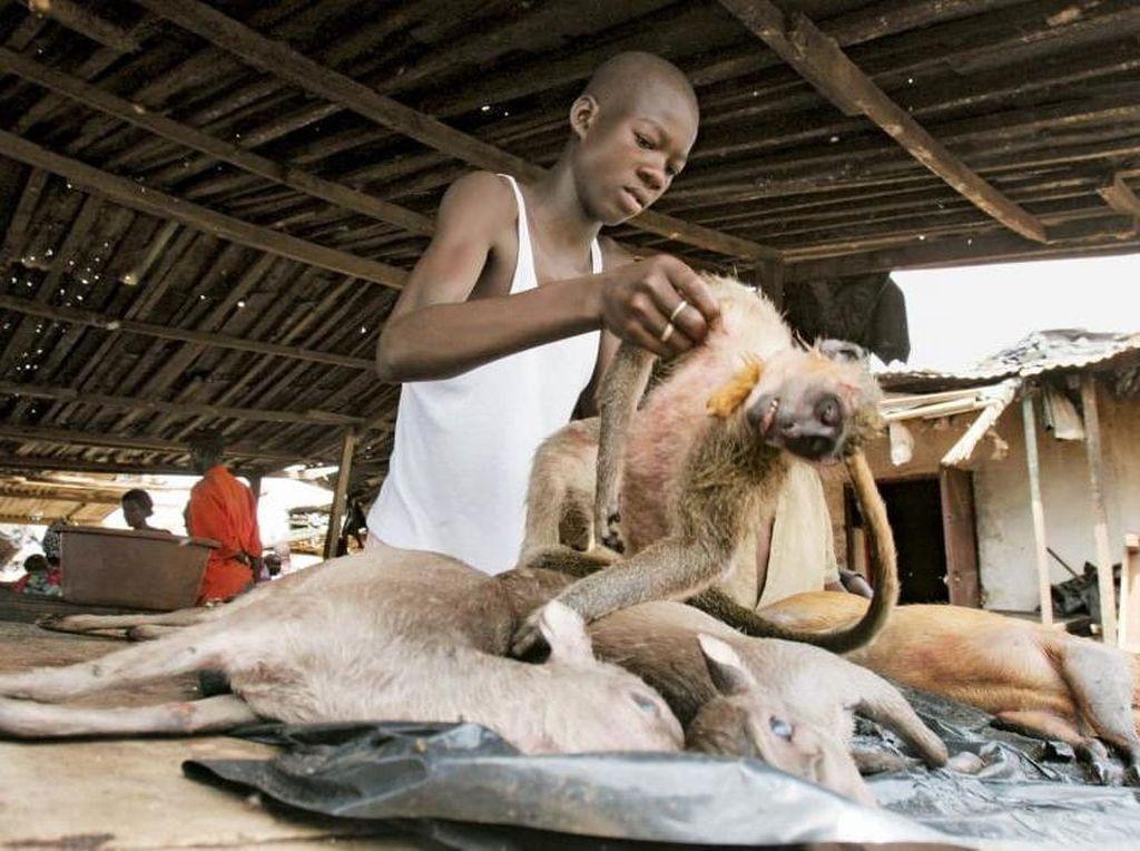 Daging Monyet Jadi Hidangan yang Populer di 5 Negara Ini