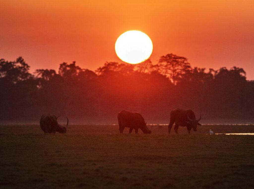 Senja di Taman Nasional Kaziranga, Rumah Bagi Satwa Liar India