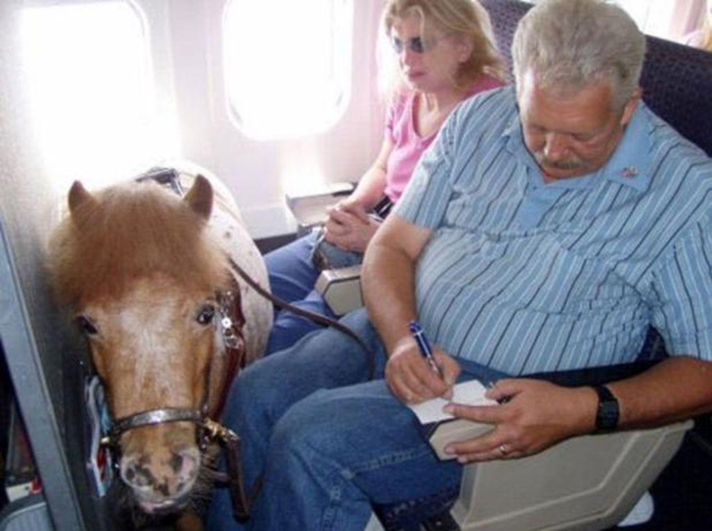 Ragam Satwa yang Pernah Dibawa ke Pesawat