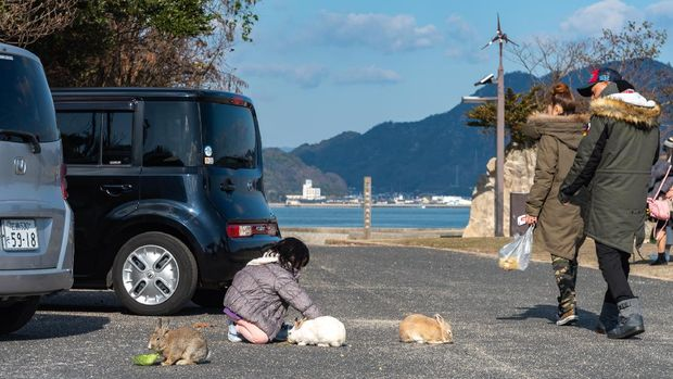 Okunoshima, Japan - January 3, 2019: japanese girl feeding wild rabbits on Okunoshima. Okunoshima, as known as the