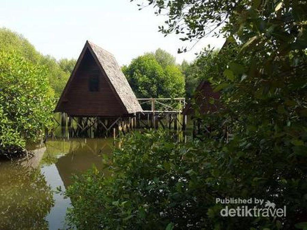 5 Hal Seru yang Bisa Dilakukan di Hutan Mangrove Jakarta