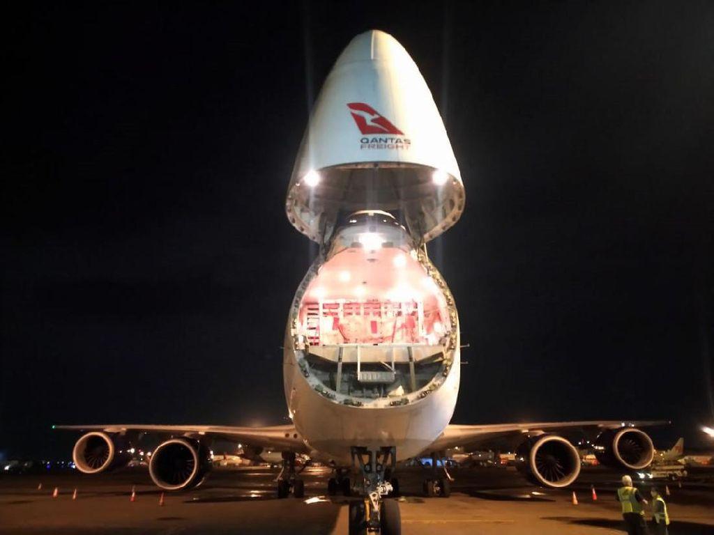 Foto: Sapi Asal Australia Diangkut Pakai Pesawat Masuk ke RI