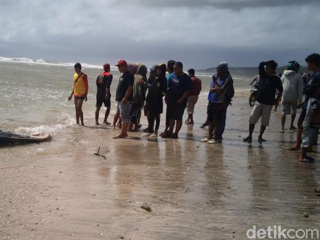 Cari Korban Kecelakaan Laut, Warga Sukabumi Temukan Bangkai Paus
