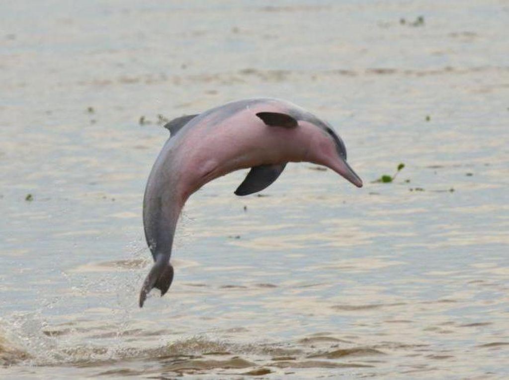 Sedih, 31 Spesies Hewan dan Tumbuhan Dinyatakan Punah