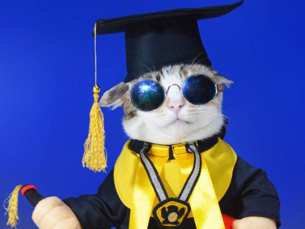 Kisah Inspiratif Pria Jualan Baju Kucing Demi Merawat 34 Ekor Kucing