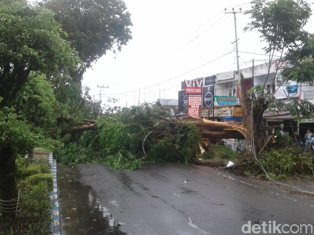 Angin Kencang, Sebuah Pohon Tumbang Timpa 2 Pemotor di Bengkulu