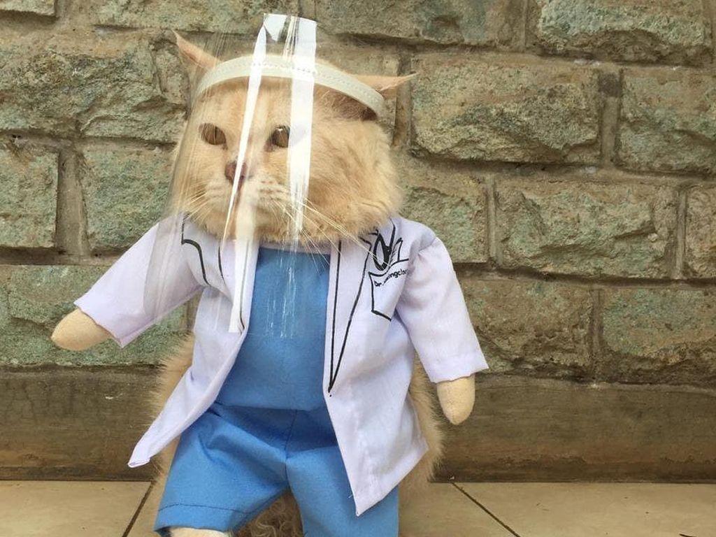 Cerita Guru SD Banting Setir Bisnis Baju Kucing, Viral Sampai Mancanegara