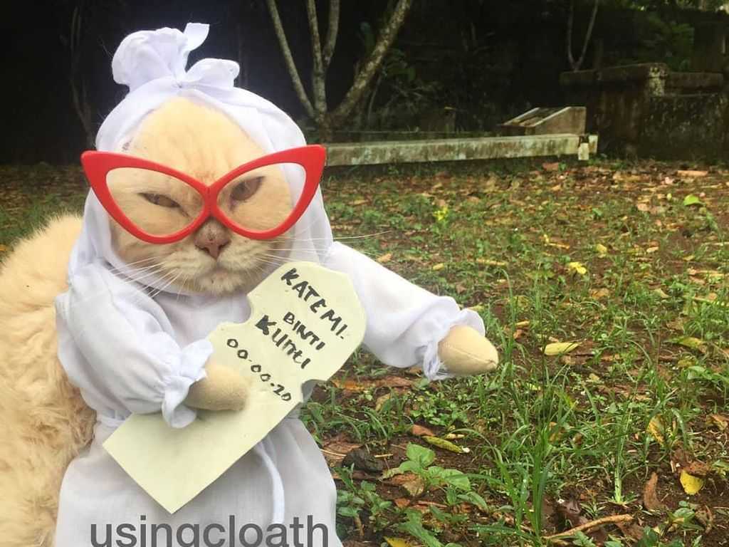 Drama Jual Baju Kucing, Ditantang Bikin Bentuk Pocong Hingga Dikecam Aktivis