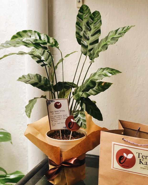 Hampers tanaman hias