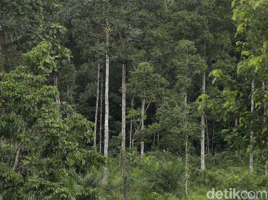 Aruk, Sisi Lain Indahnya Barat Tanah Borneo