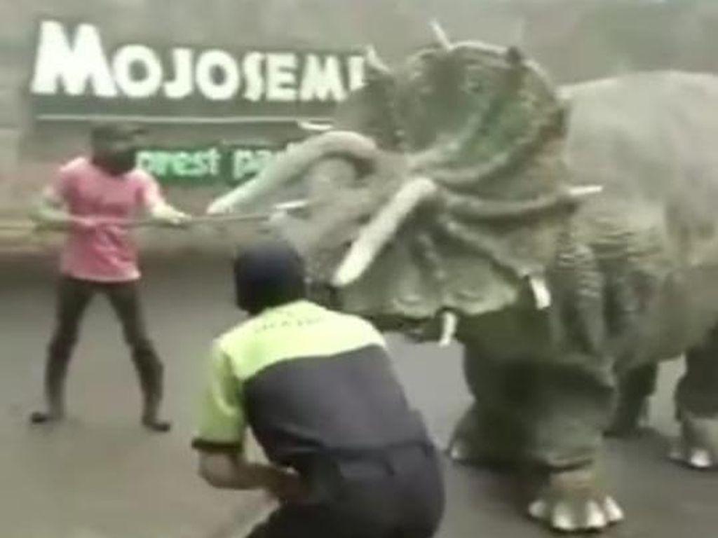 Soal Video Dinosaurus Ngamuk yang Ternyata Bagian dari Film Pendek