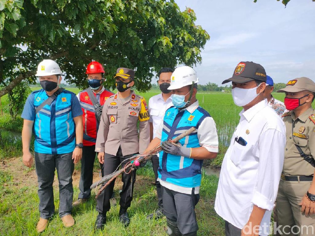 Petani Ngawi Nekat Pasang Jebakan Tikus Listrik, Polisi Putus Jaringan PLN
