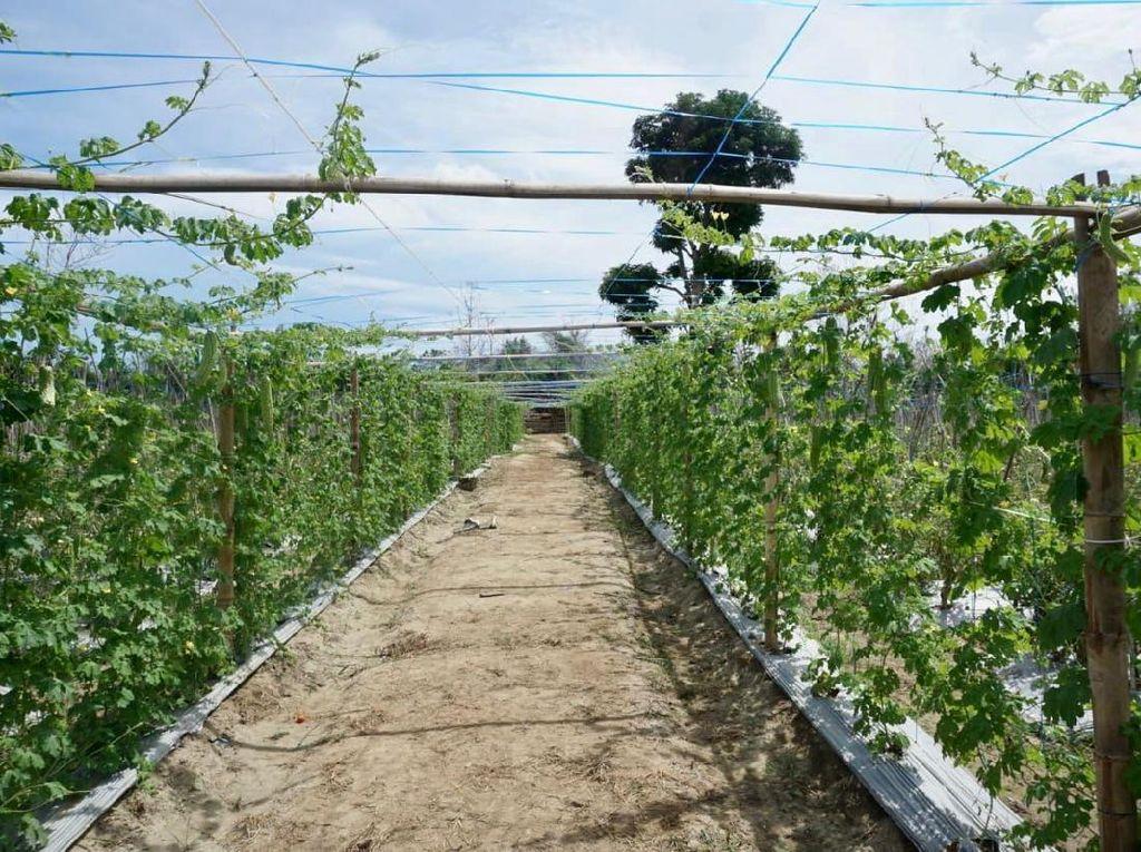 Ini Frontera Garden, Pertanian Hortikultura yang Viral di Malaka