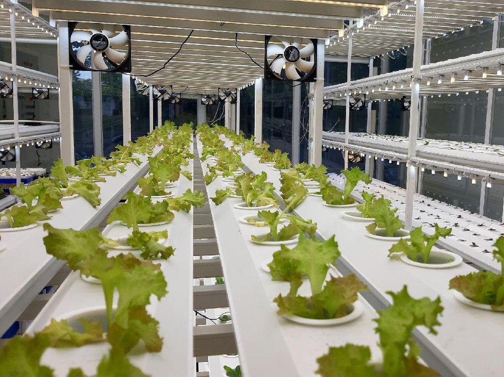 Dapat Kucuran Dana, Startup Tunas Farm Mau Bikin Hidroponik IoT