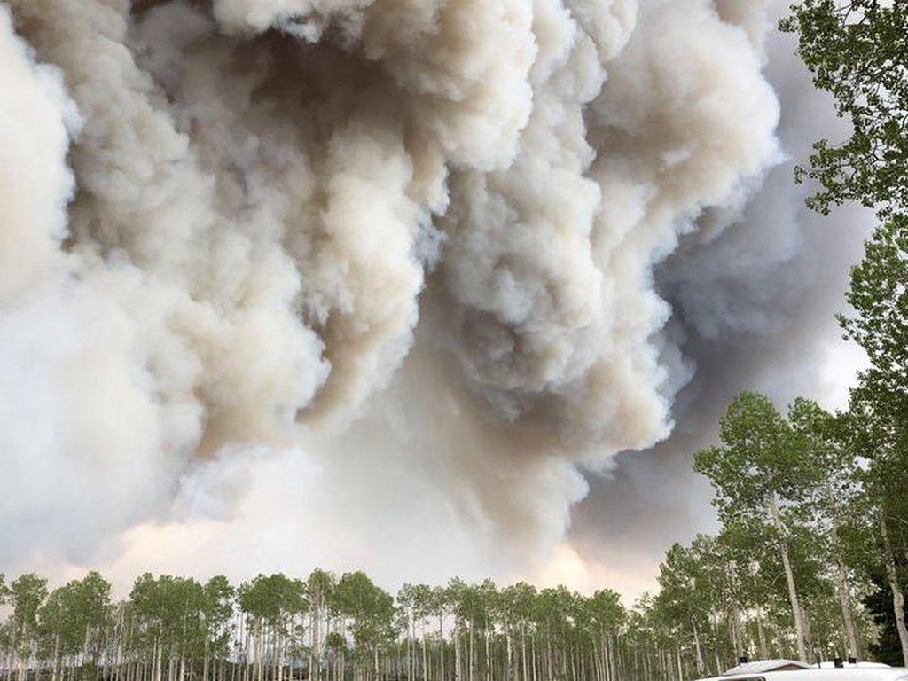 Ilmuwan Yakini Asap Kebakaran Hutan Bisa Sebarkan Penyakit Menular