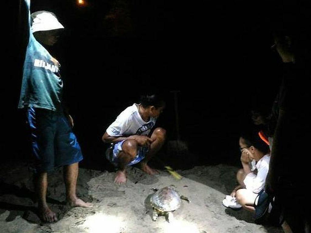 Begini Aktivitas Relawan Menjaga Kelestarian Penyu di Pacitan