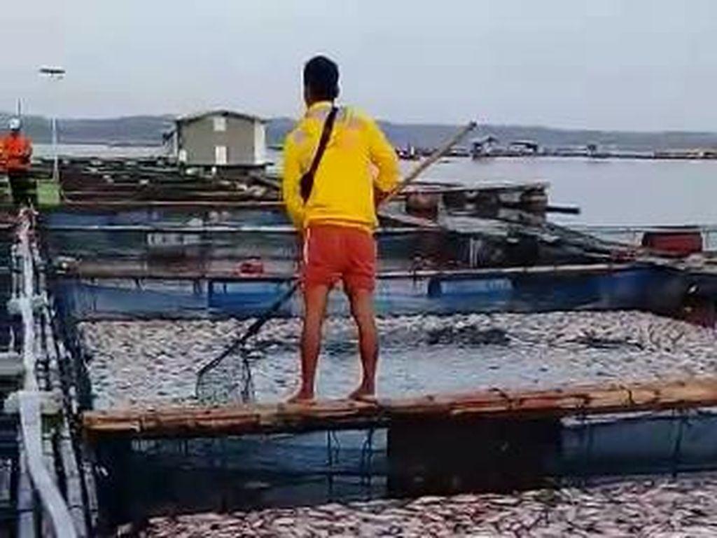 Ikan Budidaya di Waduk Kedung Ombo Sragen Mati Mendadak