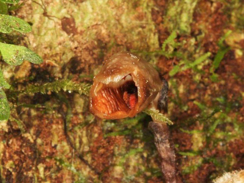 156 Spesies Baru Tanaman Ditemukan Tahun Ini, Ada Anggrek Buruk Rupa