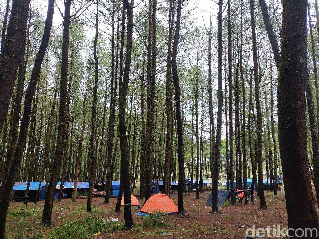 6 Manfaat Hutan bagi Manusia