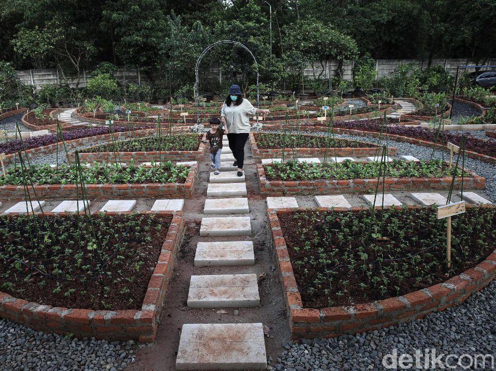 Belajar Pertanian di Agro Edukasi Wisata Ragunan