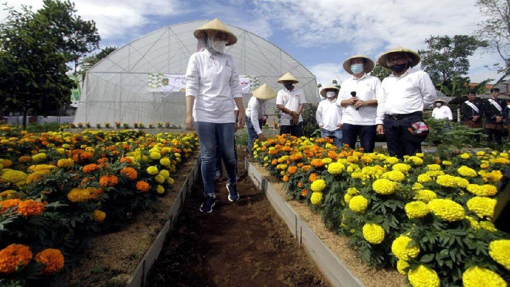 Festival Hortikultura di Purwakarta