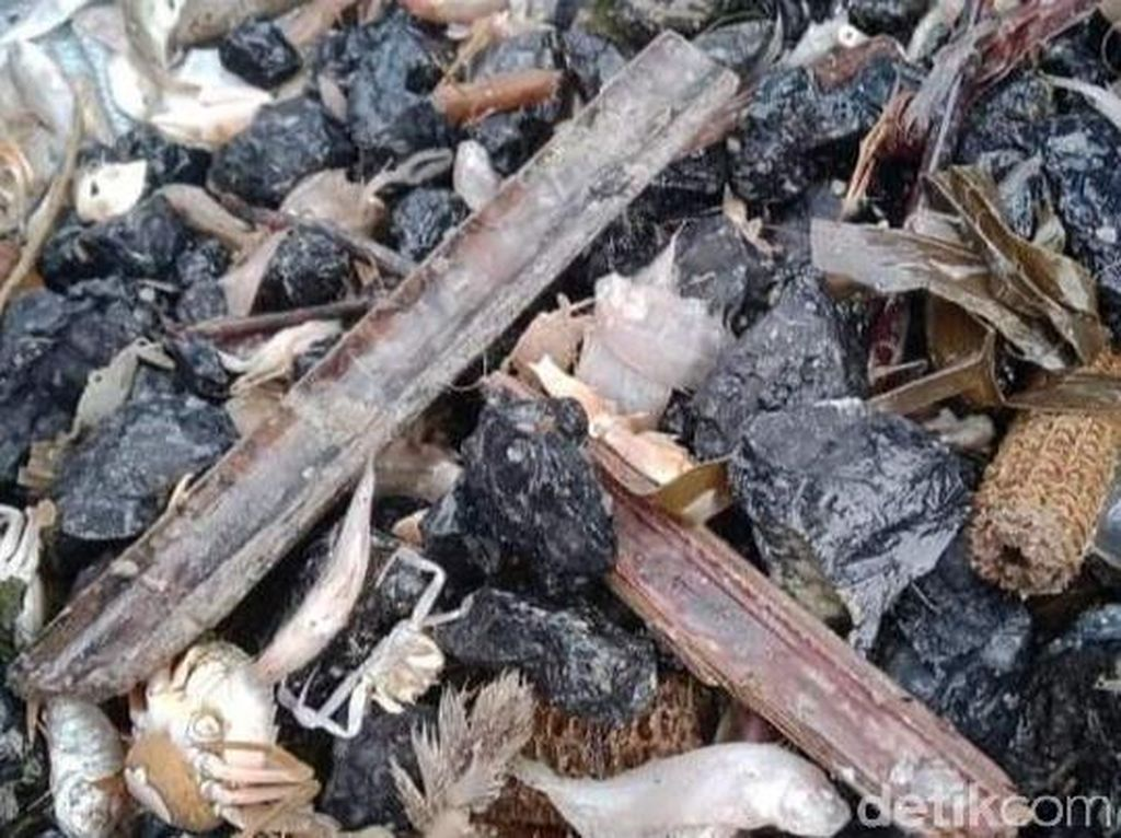 DKP Jateng Ungkap Asal Muasal Batu Bara yang Cemari Laut Batang
