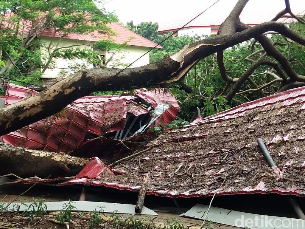 Hujan Deras Bikin Pohon Tumbang, Parkiran Unhas Roboh Tertimpa